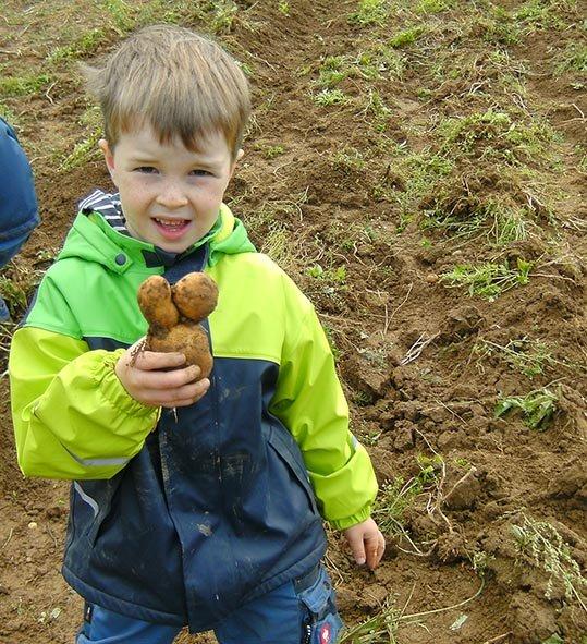 Kartoffelernte 10