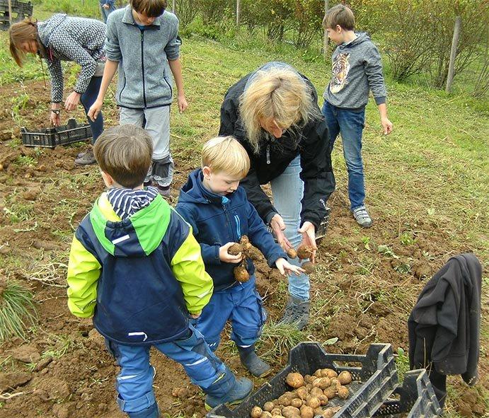 Kartoffelernte 11