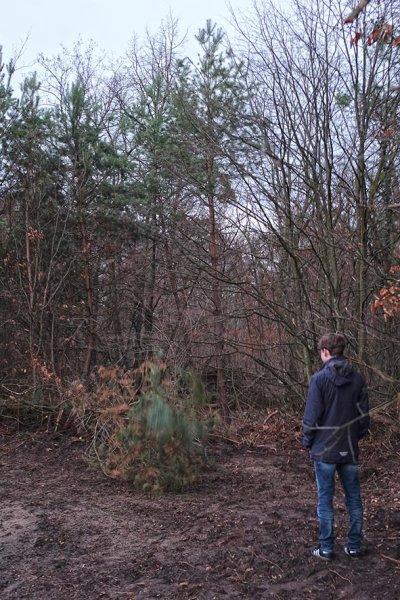 Naturzaun am Waldweiher Malcher Tanne - Baum fällt 2