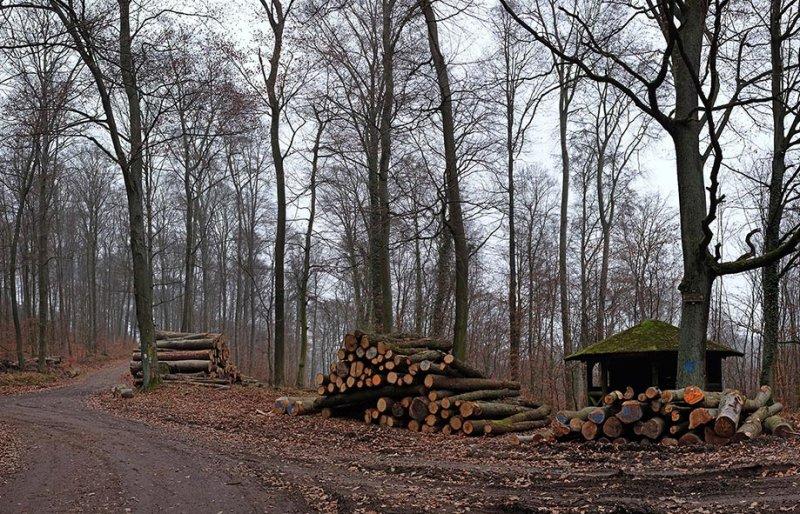 Holzlagerplatz am 10-Wege-Platz: Holzeinschlag auf dem Langen Berg