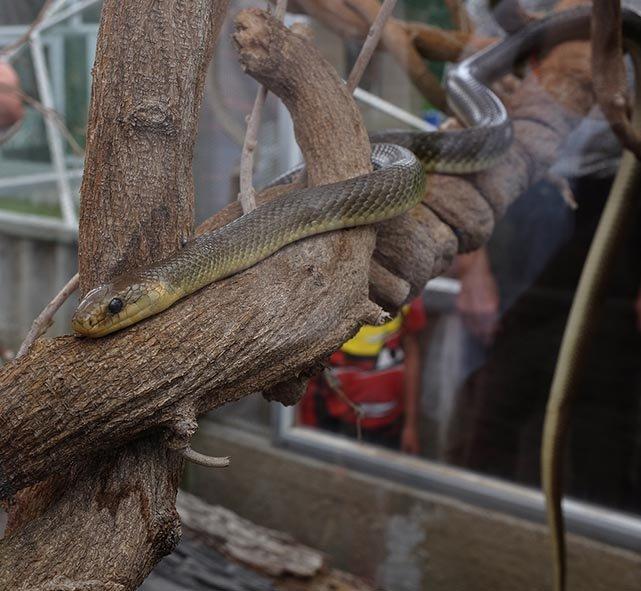 Schlangenbeschwörer 23