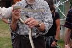 Schlangenbeschwörer 04