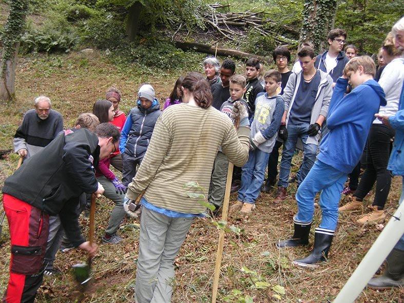 Pflanzaktion der NAJU im Alsbacher Wald 09