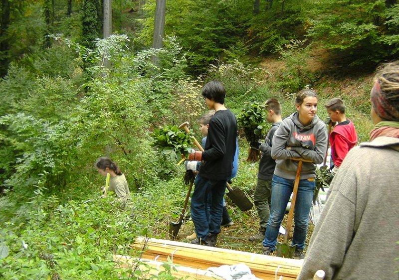 Pflanzaktion der NAJU im Alsbacher Wald 11
