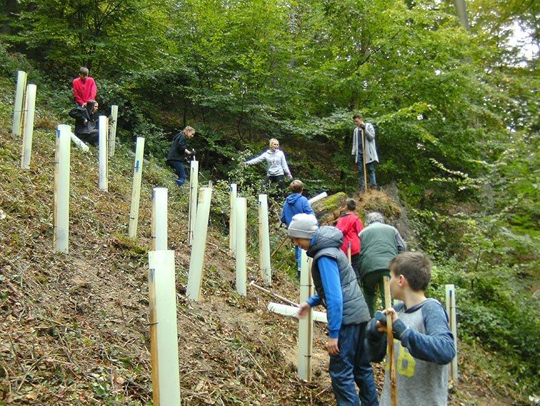 Pflanzaktion der NAJU im Alsbacher Wald 12