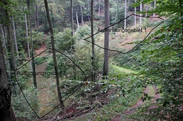 Pflanzaktion der NAJU im Alsbacher Wald 01