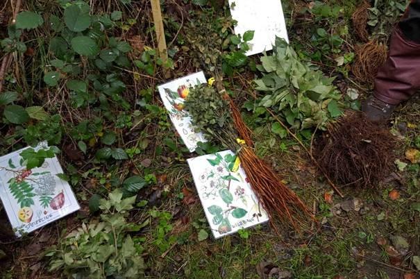 Pflanzaktion der NAJU im Alsbacher Wald 06