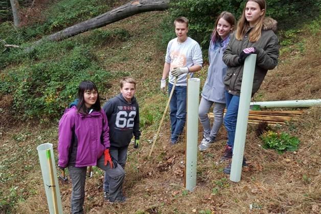 Pflanzaktion der NAJU im Alsbacher Wald 07