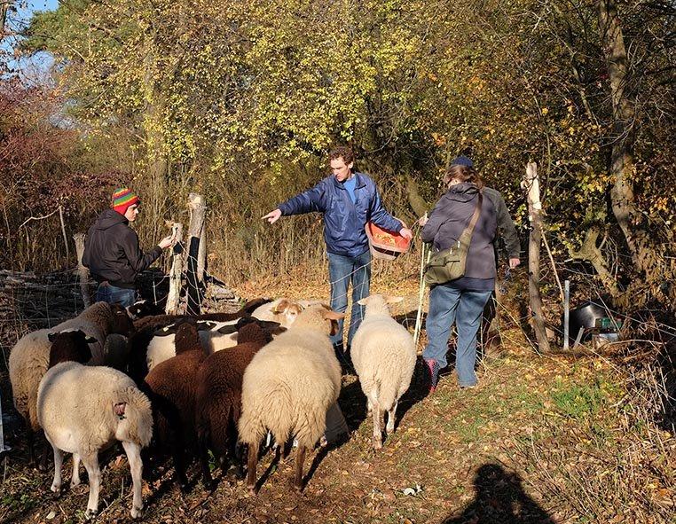 Schafe umstellen 04 10x13s
