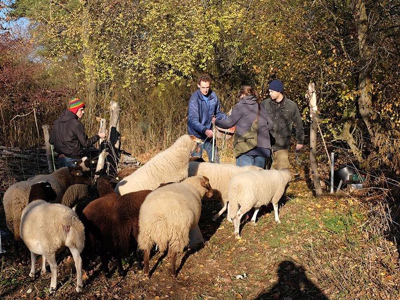 Schafe umstellen 05 10x13s