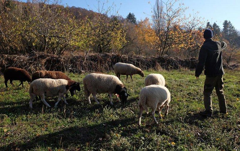 Schafe umstellen 07 10x16s