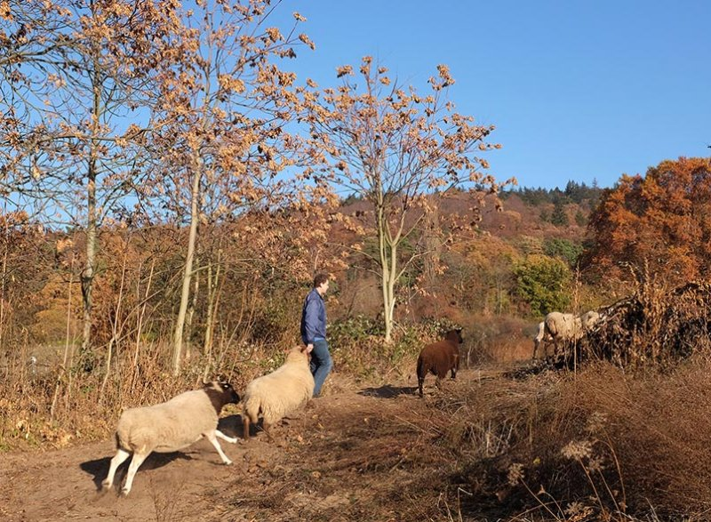 Schafe umstellen 15 10x13s