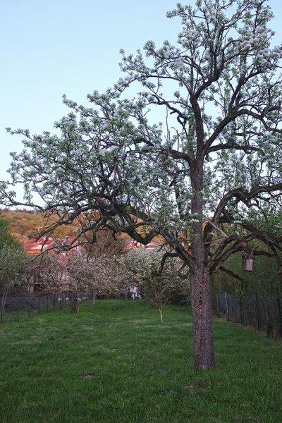 Böckchen-Weide 3