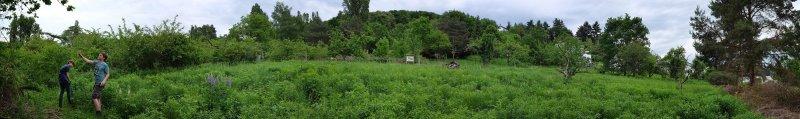 Bienenweide 2 10x67s