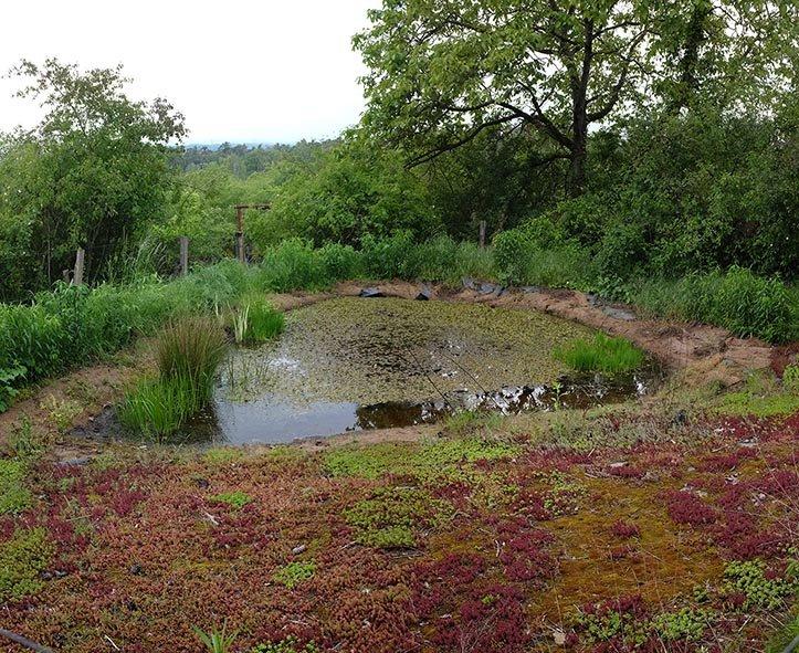 Tag-der-Artenvielfalt-62-Amphibienteich-im-Wühlmausgarten-10x12s