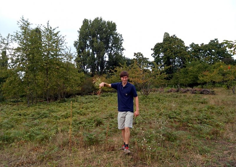 Götterbaum-Weide 1 10x13s