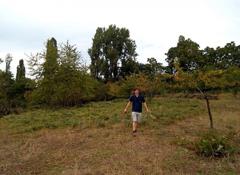 Götterbaum-Weide 2 10x13s