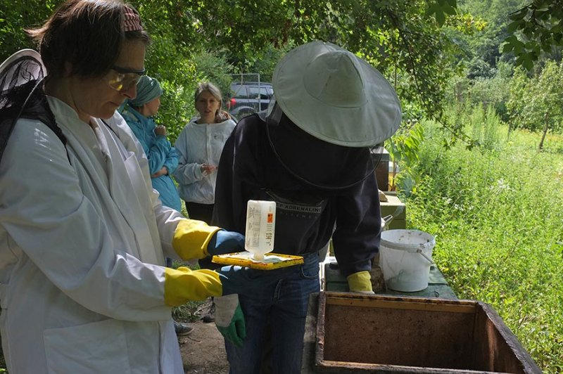 Imkerkurs Etzwiesen 7 - Ameisensäurebehandlung