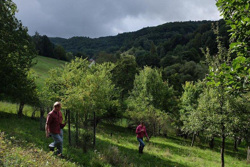 Steinkauzröhren Stettbacher Tal 01