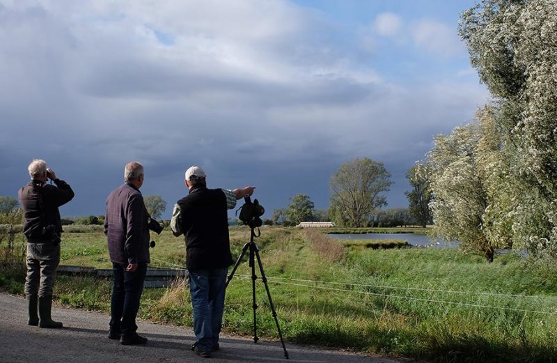 Birdwatching Landbachaue 5