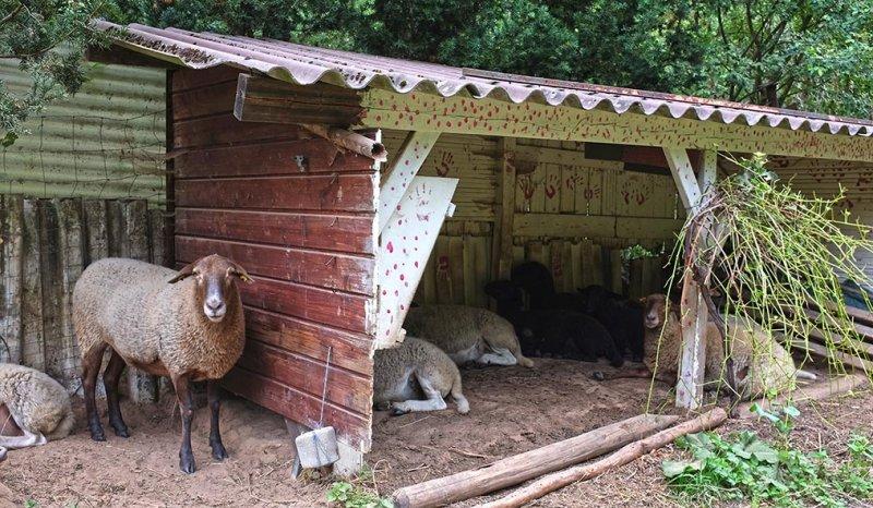 Schafstall Etzwiesen 1