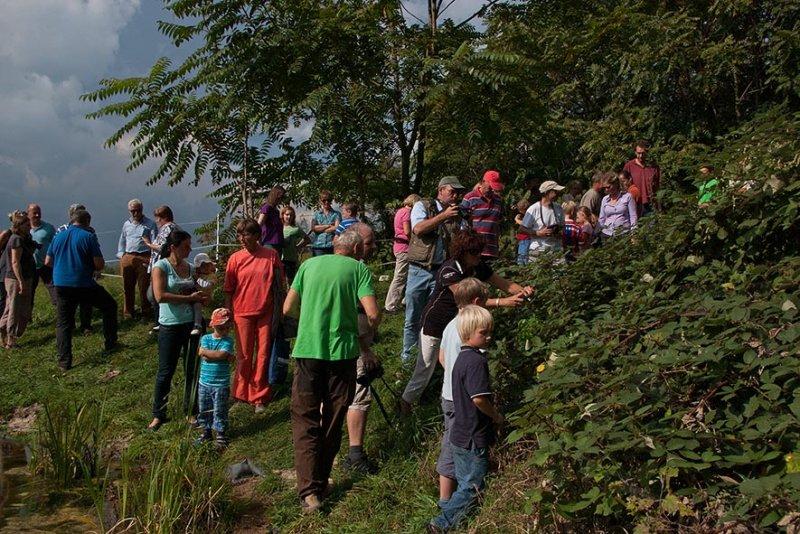 Aussetzaktion Laubfrösche am Hermelinweiher - Ab in die Büsche 23 JZ small
