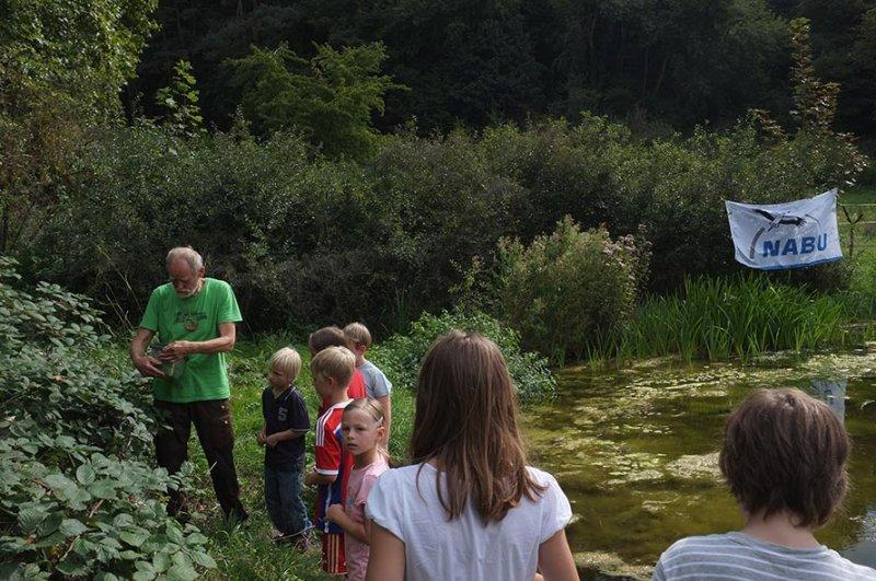 Aussetzaktion Laubfrösche am Hermelinweiher - Ab in die Büsche 13