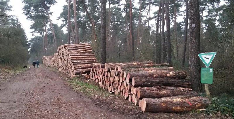 NSG Kalksandkiefernwald bei Seeheim - Holzwirtschaft 2