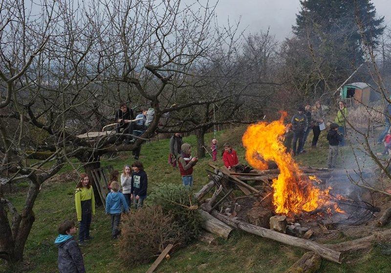 50 Weihnachtsbaum-Verbrennung