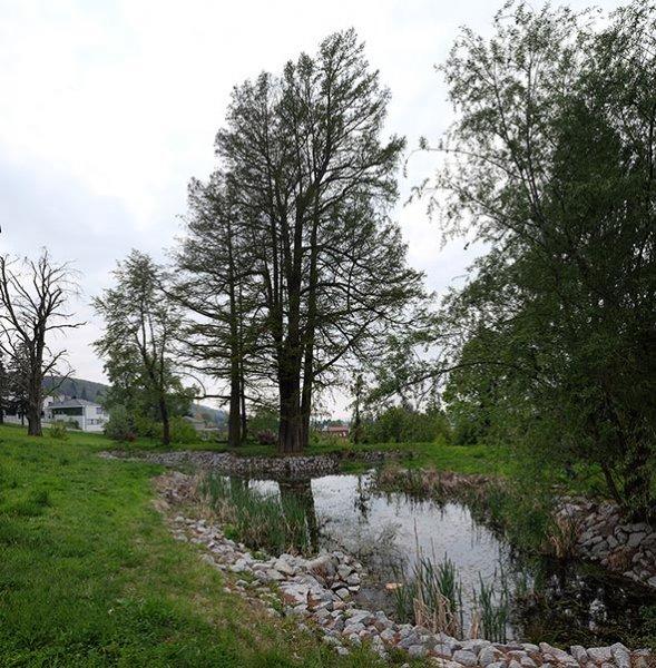 Schlosspark Amphibienteich