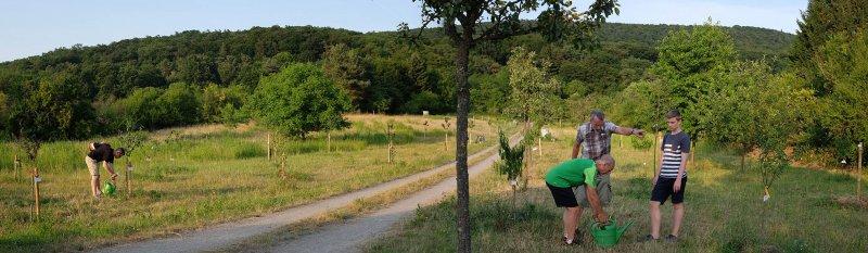 Kirschgarten 06