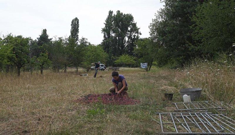 Vorbereitung Schafumzug 2 10x18s