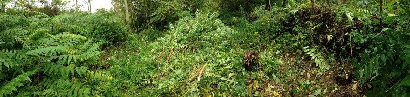 Götterbaumwald am Naturzaun 1 small