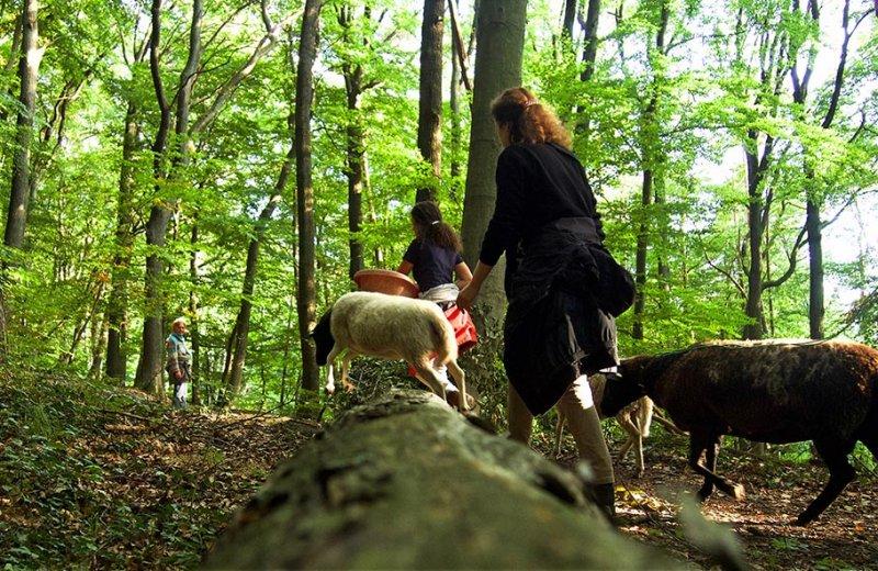 Schafe im Wald 04