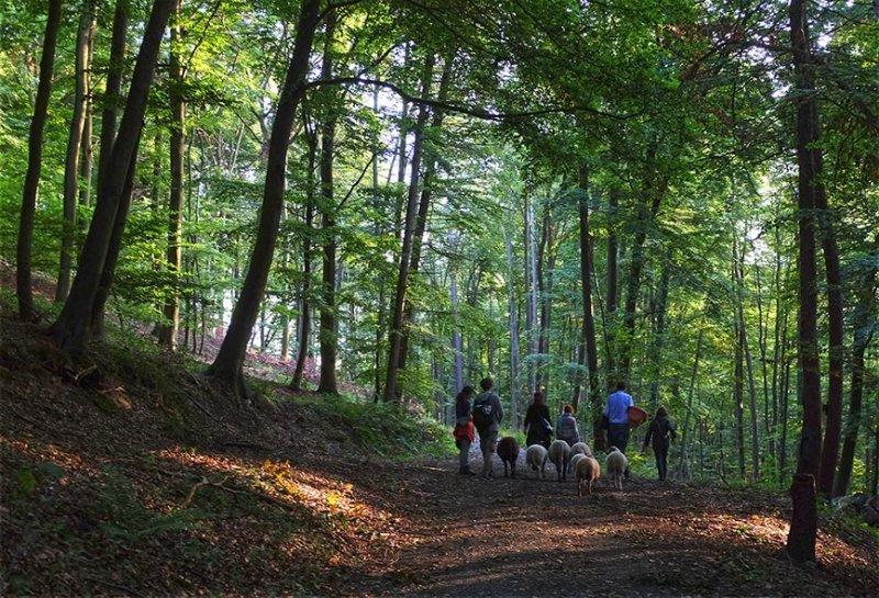 Schafe im Wald 07