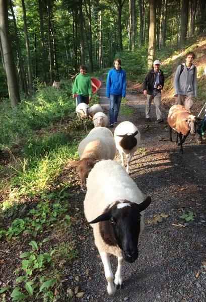 Schafe im Wald 3c Silas 10x15s