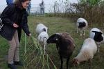 Schaf-Wanderung 01