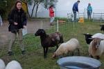 Schaf-Wanderung 02