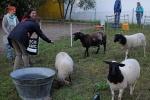 Schaf-Wanderung 03