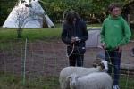 Schaf-Wanderung 04