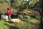 Schaf-Wanderung 07
