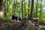 Schafe im Wald 03