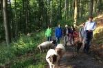 Schafe im Wald 09