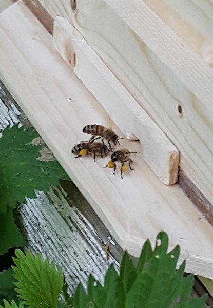 bemalte Bienenkiste Markus & Julius 3