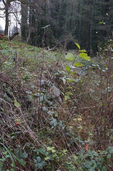 Etzwiesen 5