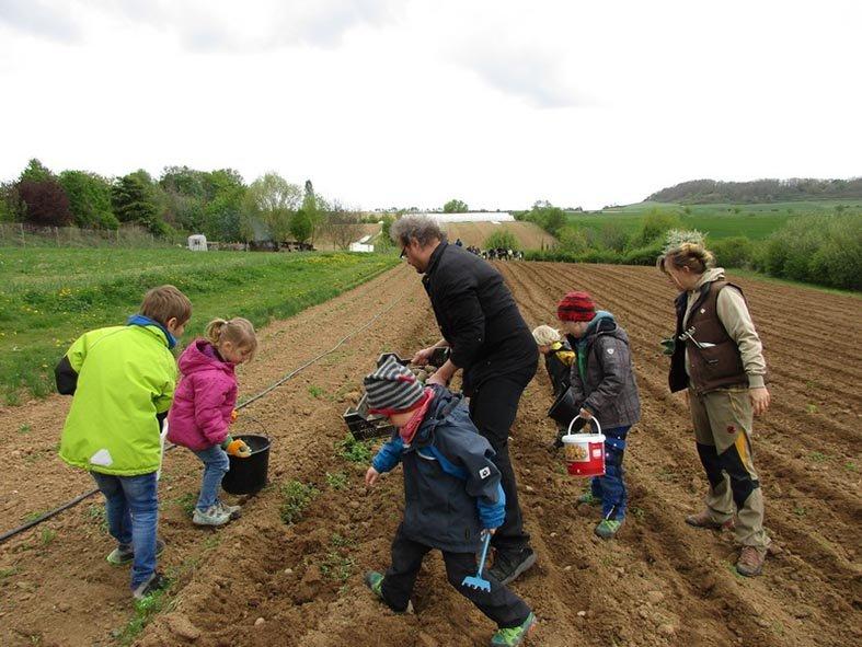 Lindenhof Kartoffeln legen 2