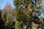 Baggereinsatz Etzwiesen 06 10x12s