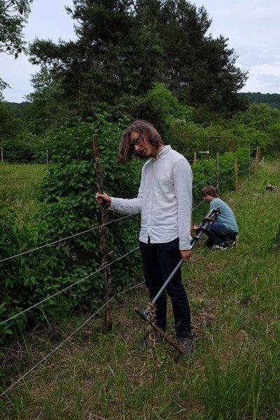 Steinmetz-Weide Pfosten setzen 15 10x15s