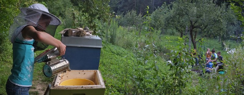 Lisa füttert die Bienen 1