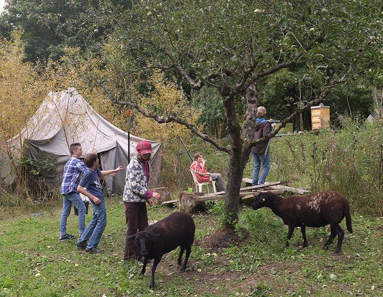 Apfelernte Etzwiesen 1